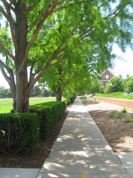 outdoor photo of bike path leading to Huff Hall